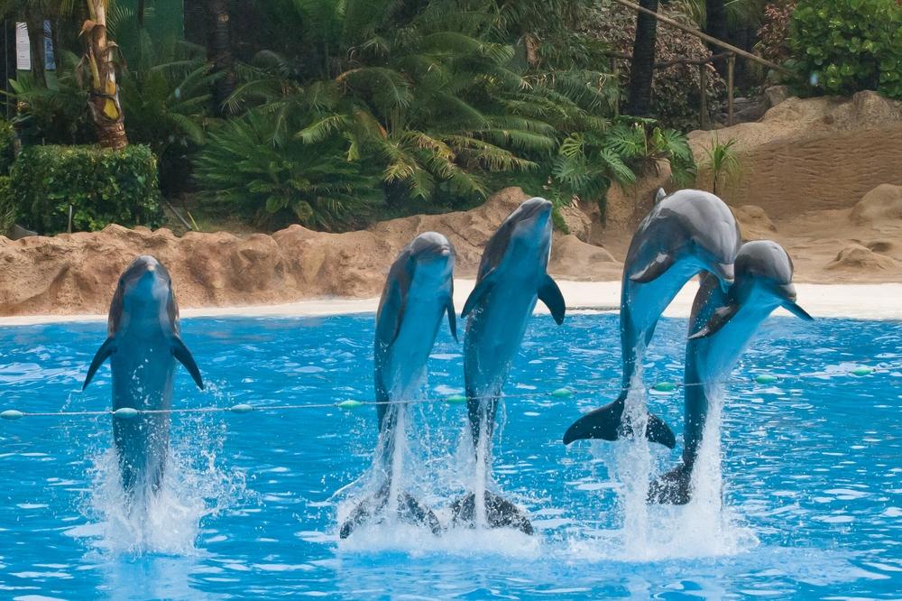 Teneriffa Loro Parque Park Delfin Delfinshow Tagesausflug