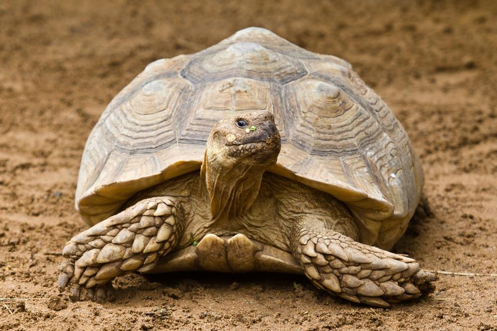 Teneriffa Loro Parque Park Schildkröte Tagesreise Pauschalreise Urlaub