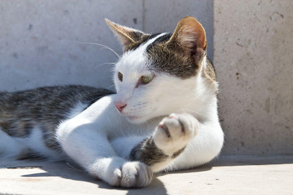Katze Kroatien Kreuzfahrt MS Europa 2