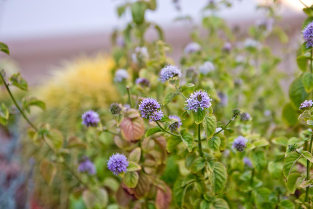 Zypern Roadtrip Landschaft Blumen