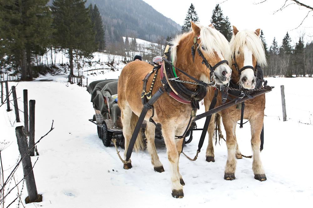 Schlittenfahrt Ski Rohrmoss Schladming