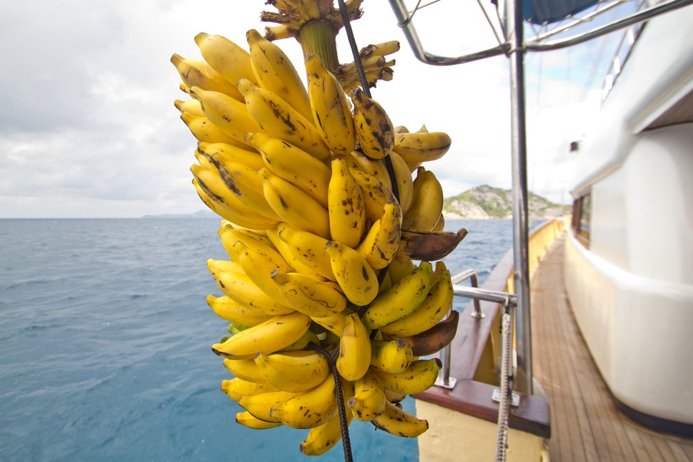 Sea Star Grand Soeur Seychellen Anker