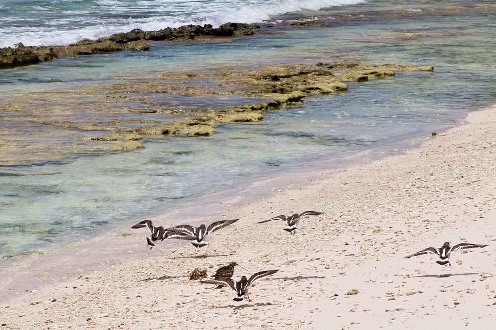 Strand Grand Soeur Seychellen Kreuzfahrt