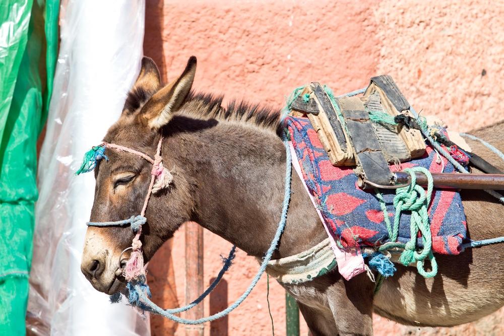 Marrakesch Esel Karre