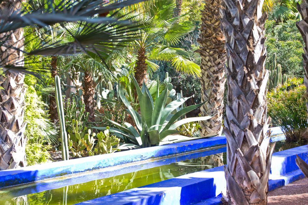 Marrakesch Jardin Majorelle Pflanzen