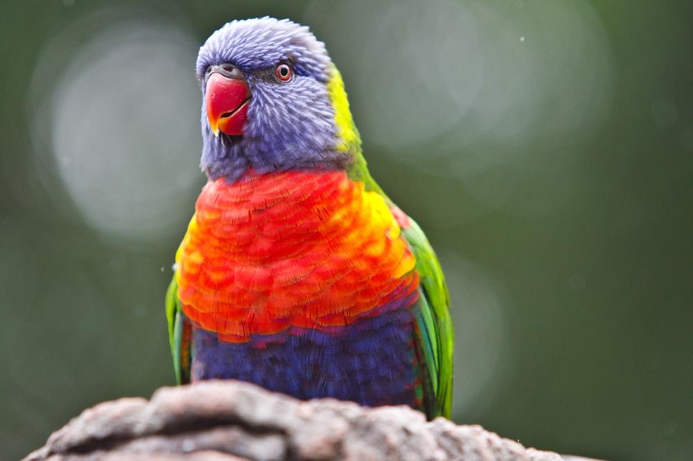 Teneriffa Loro Parque Park Papagei Papageinsammlung Tagesreise Pauschalreise Urlaub