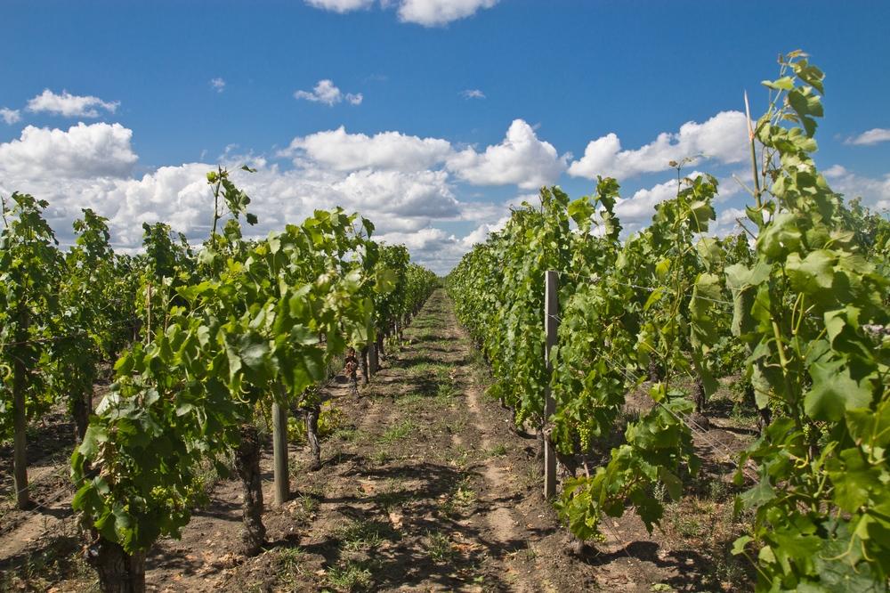 Chateau Wein Bordeaux
