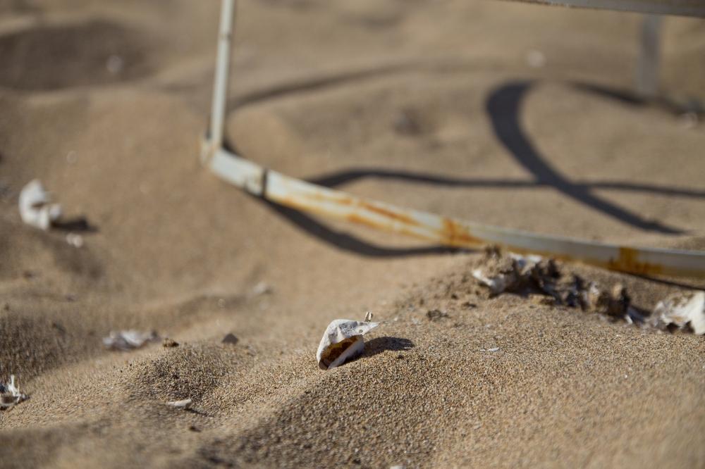 Lara Bay Zypern Turtle Bay Schildkröten