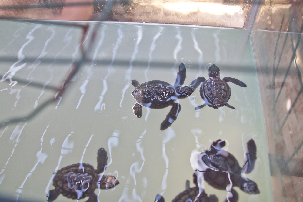 Turtle Bay Cyprus Lara Bay