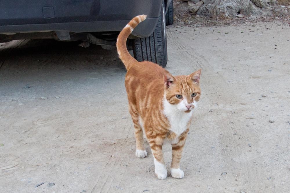 Katze Zypern Limassol
