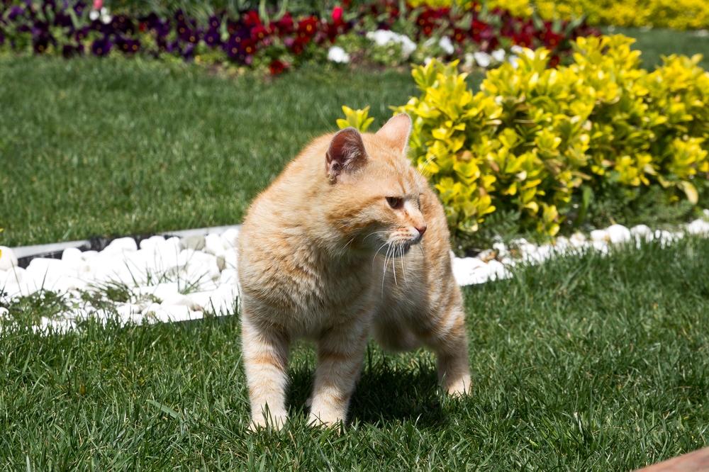 Katze Istanbul Türkei