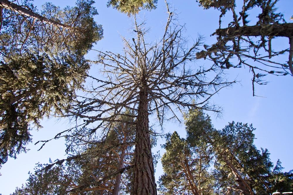 Baumwipfel Wald Baum Wanderung Schnee